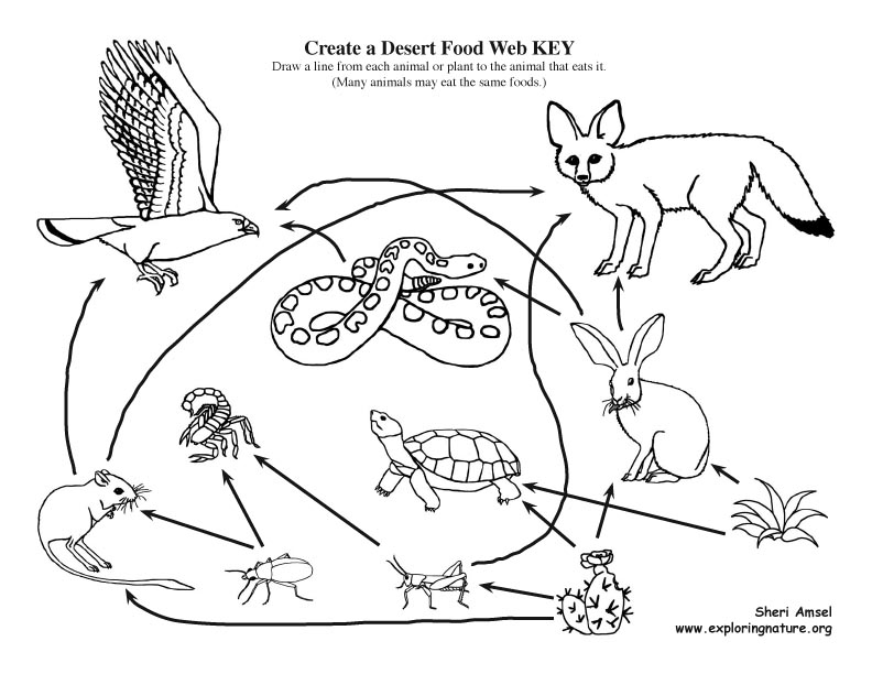 Desert Food Web Matching