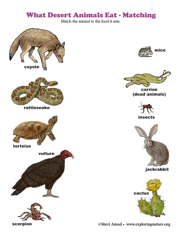 What Desert Animals Eat - Matching (Color)