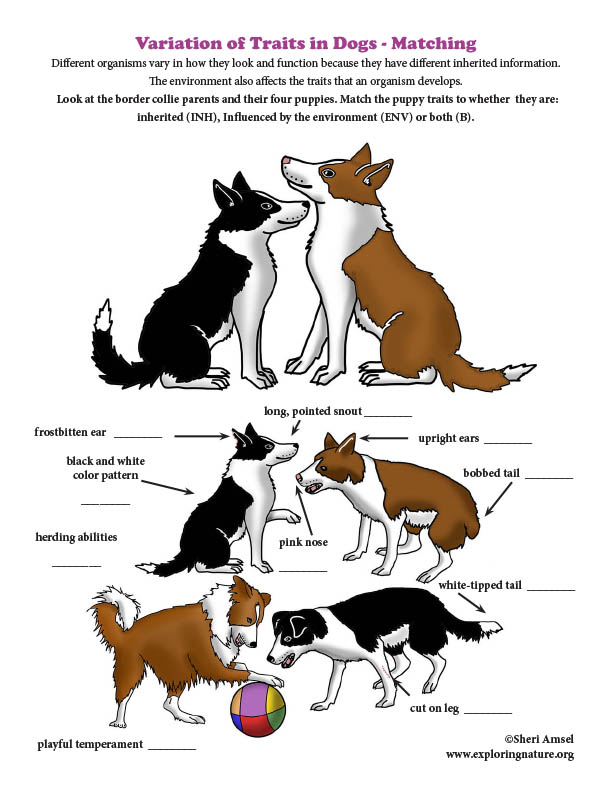 Variation of Traits in Dogs - Matching