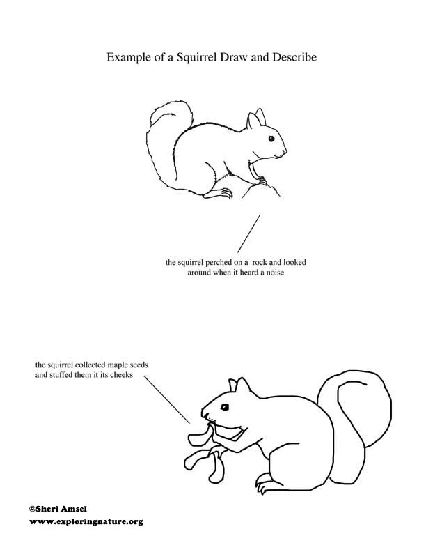 Animal Worksheet Squirrel Pdf Animal Worksheet Squirrel Pdf