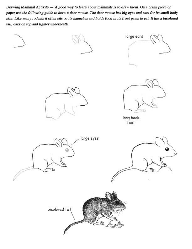 Drawing Mammals - Activity Mammals