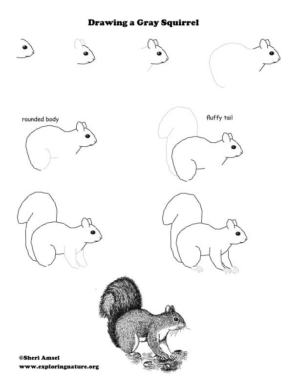 Drawing Mammals - Activity