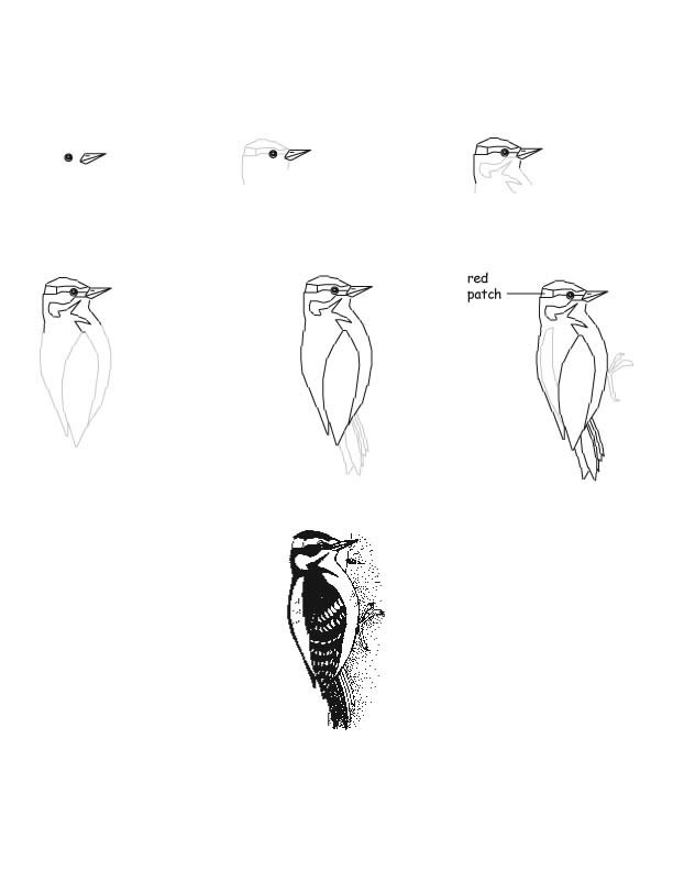Animal Signs - Woodpeckers & the Life Cycle of Trees