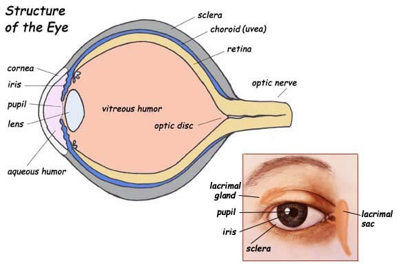 Label the Part of the Eye
