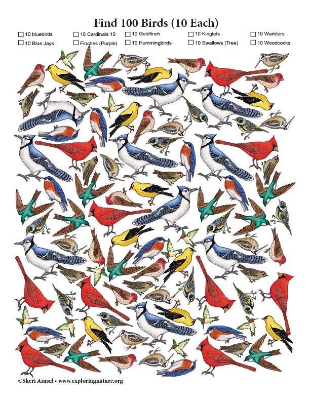 Find 100 Birds