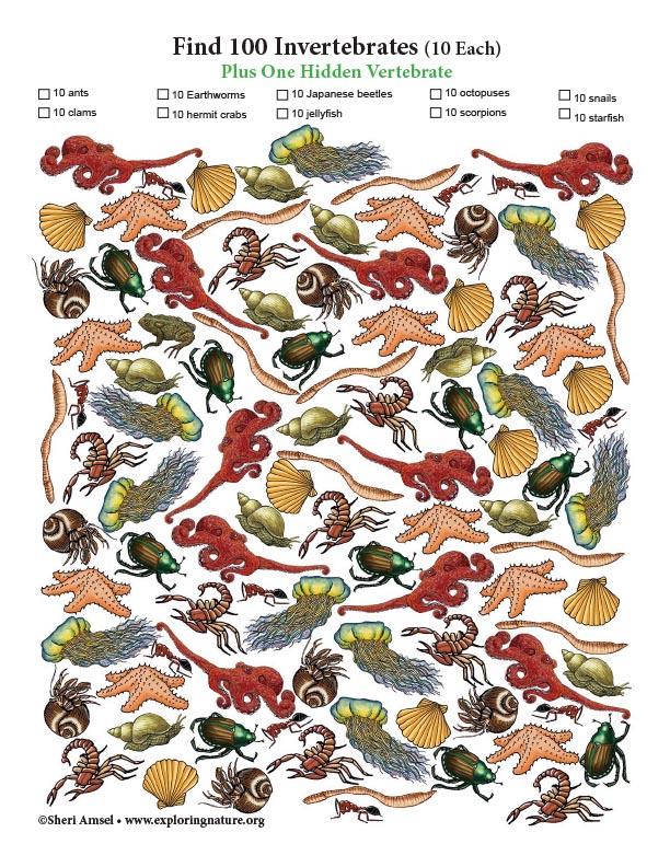 Find 100 Invertebrates (Plus One Hidden Vertebrate)