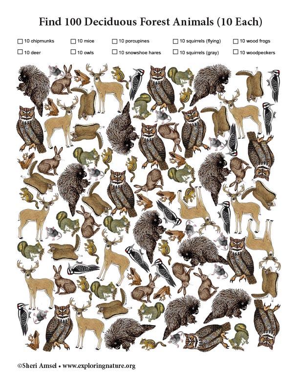Find 100 Deciduous Forest Animals