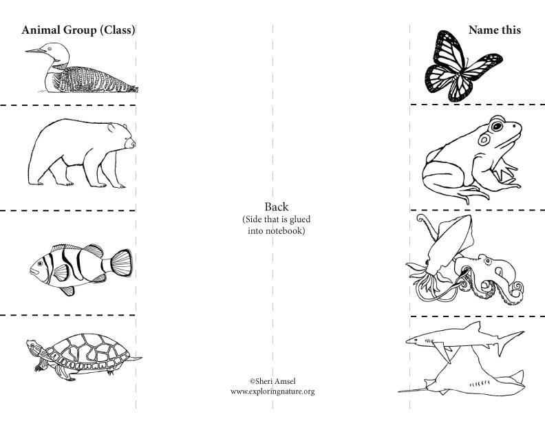 Animal Classes: Foldable Activity