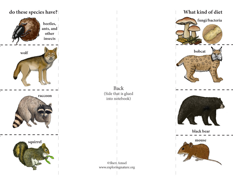 Animal Diets: Foldable Activity