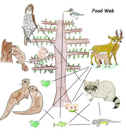 Drawing Food Webs With Own Animal Art