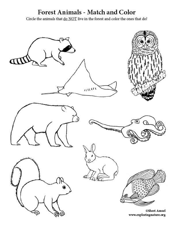 Deciduous Forest Animals - Match and Color