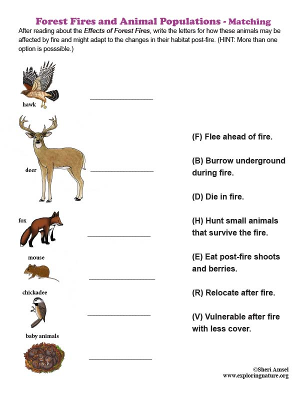Forest Fires and Animal Populations - Matching