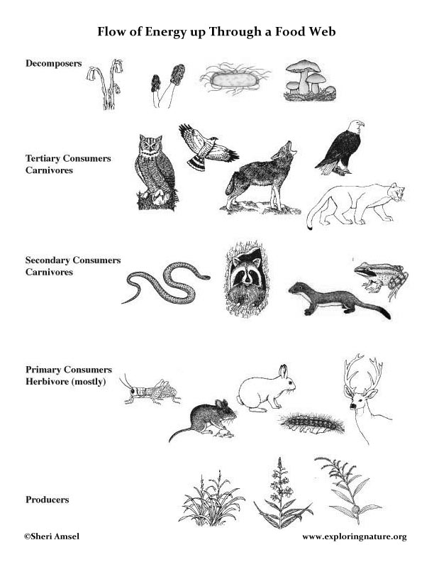 Web Chart Furthermore Worksheets What Do Animals Eat 2 In Addition ...