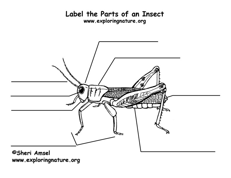 label the parts of an insect. Black Bedroom Furniture Sets. Home Design Ideas