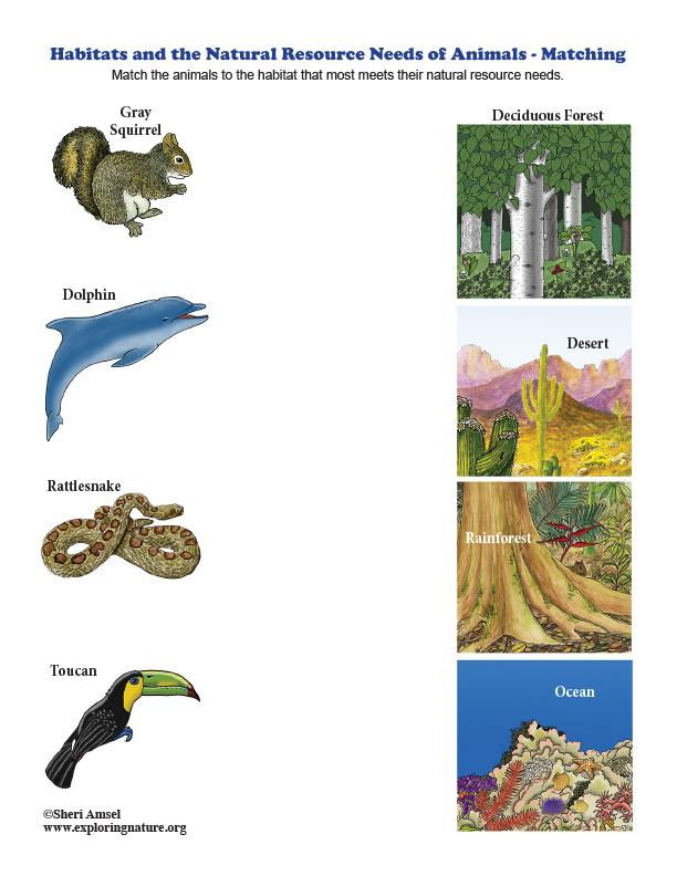 Habitats and the Natural Resource Needs of Animals - Matching