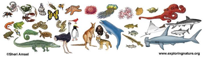 Animal (General) Activities header