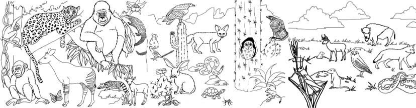 Animals in their Habitat activity