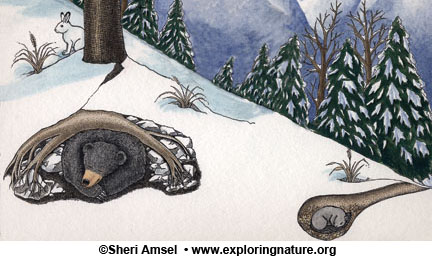 How do animals survive winter hibernation migration - What temperature to keep house in winter when gone ...