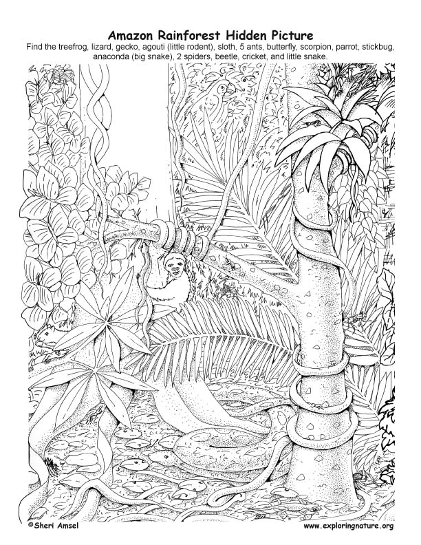 Nature Coloring Books Pdf