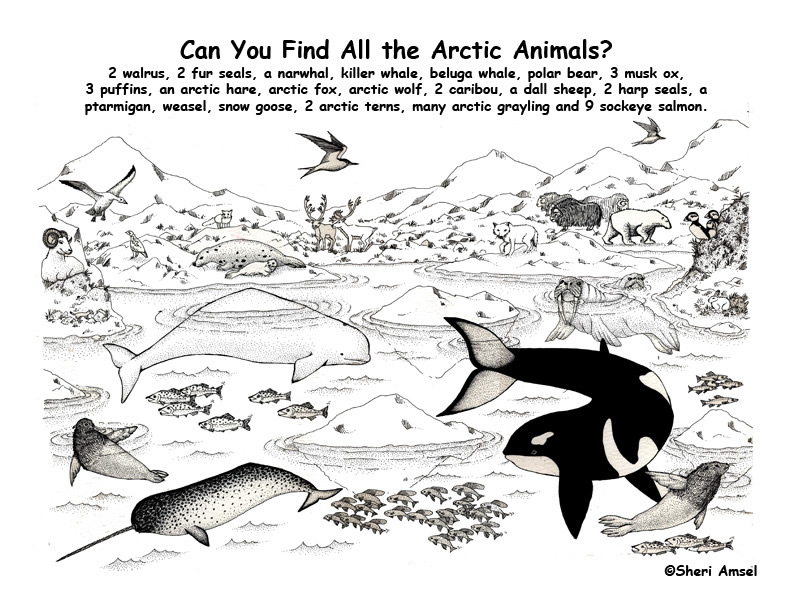 arctic habitat find the native species exploring