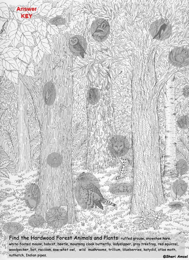 Hardwood Forest Hidden Picture