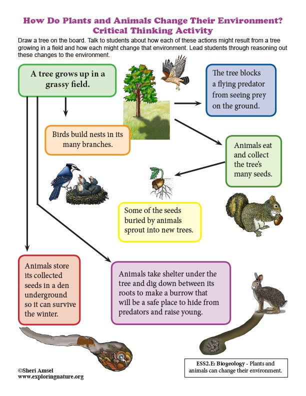 How Do Plants and Animals Change Their Environment? Critical Thinking Activity