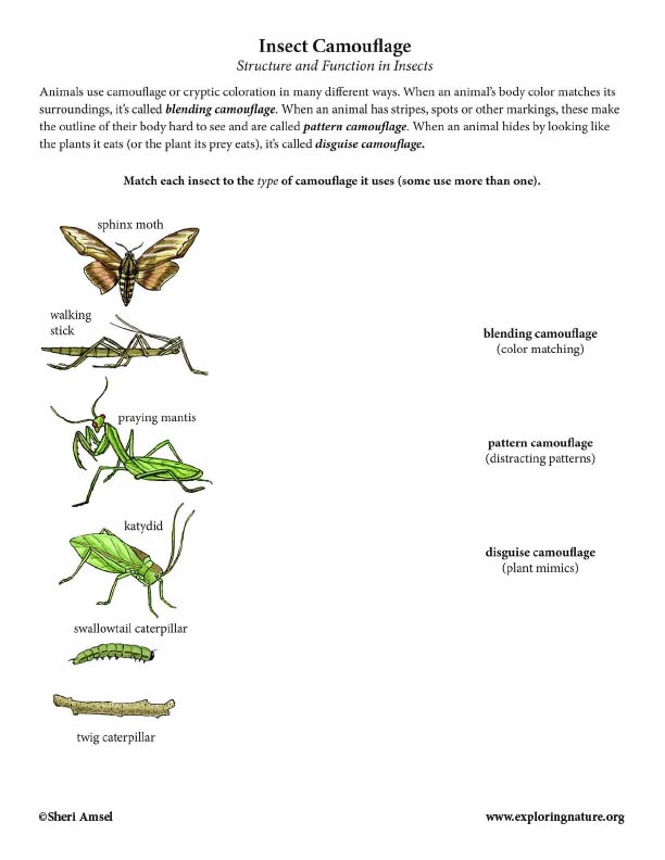 Insect Camouflage Matching - Structure & Function