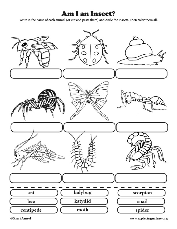 Am I an Insect? Classification for Elementary