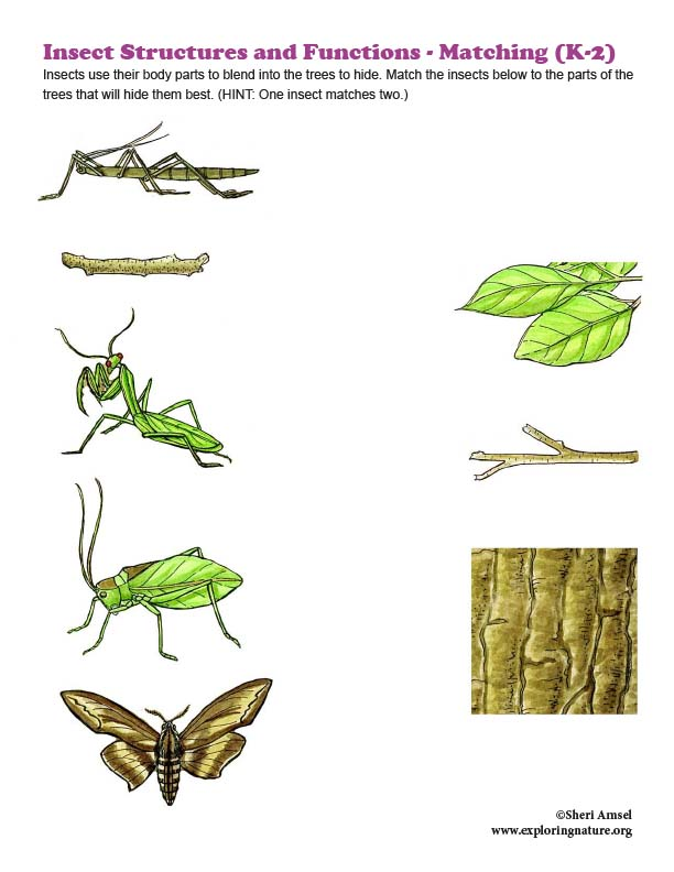 Insect Structures and Functions - Matching (K-2)