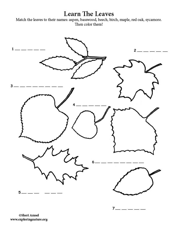 Tree Identification by Leaves - Fill in the Blank