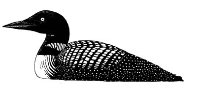 Wetland Birds - Read and React