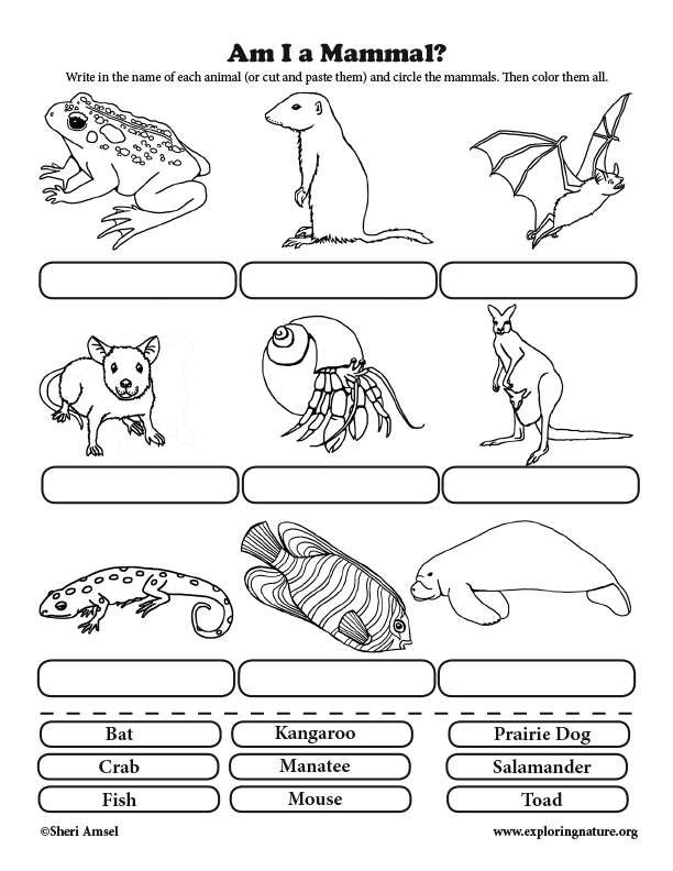 Am I a Mammal? Classification for Elementary