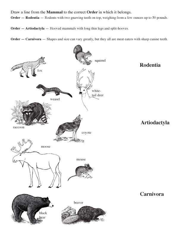 Matching Mammals to Their Family and Order