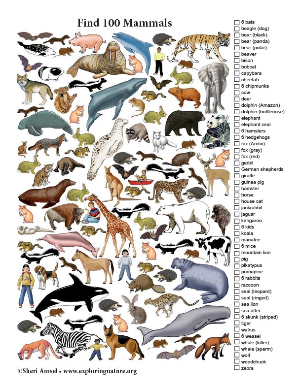 Mammals Search - Find 100