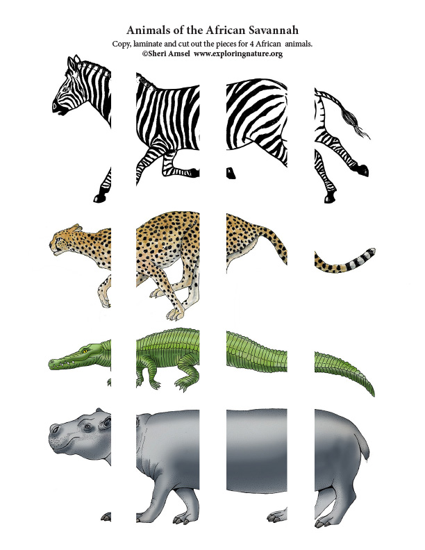 Matching Animal Parts - Animals of the African Savannah