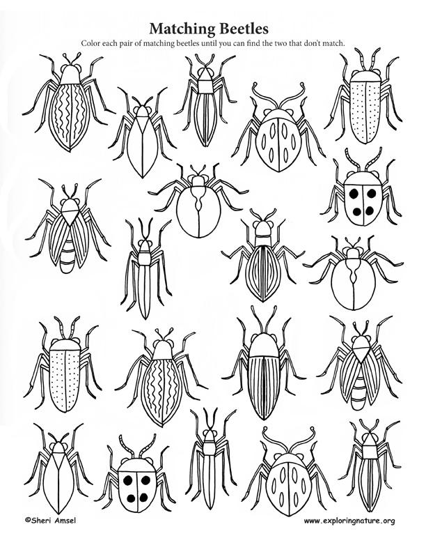 Matching Beetles