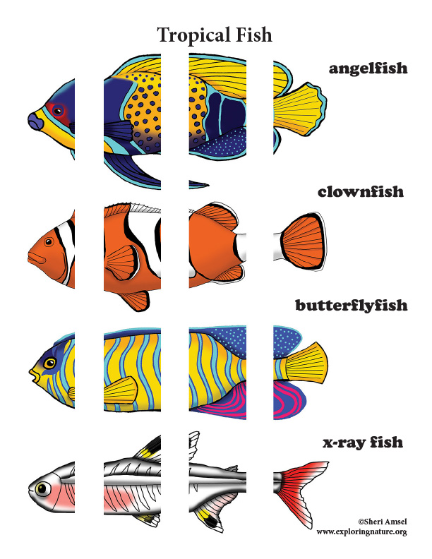 Matching Body Parts – Tropical Fish