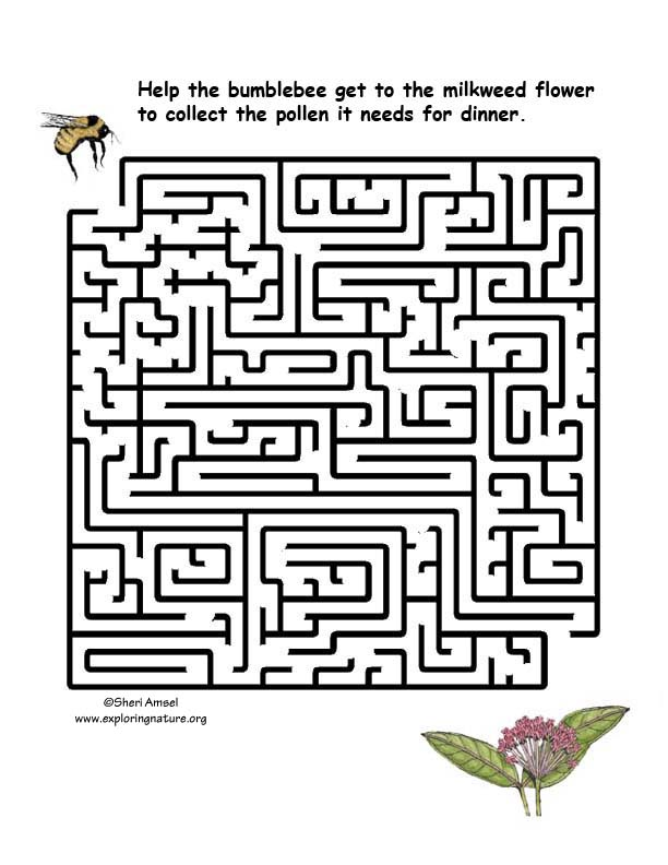 Maze - What Does the Bumblebee Eat?