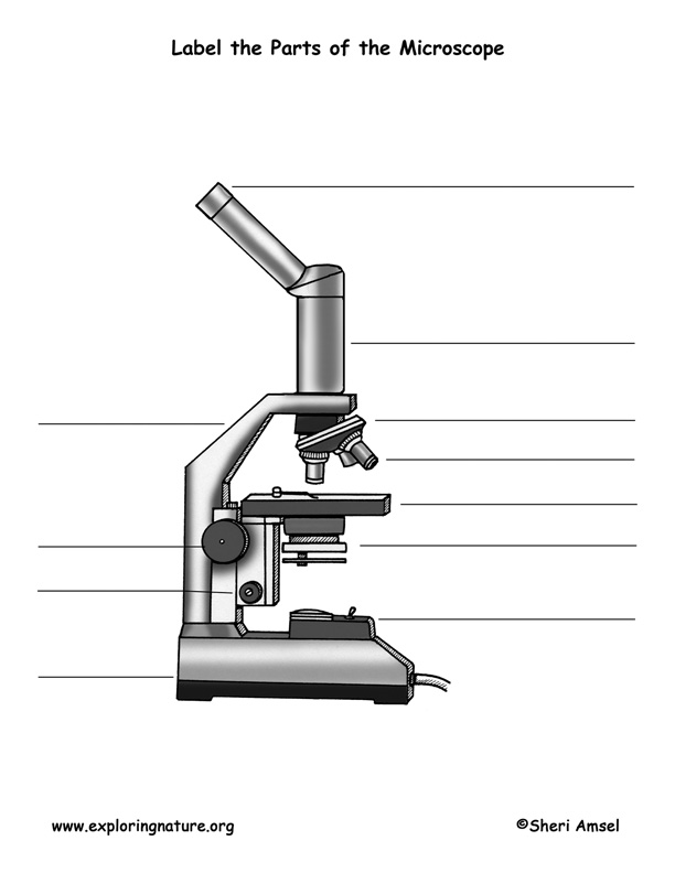 Microscope Labeling Activity