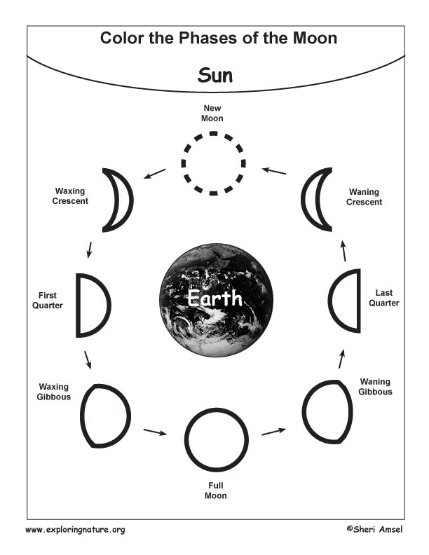 blank moon phases worksheet  phases of the moon  search