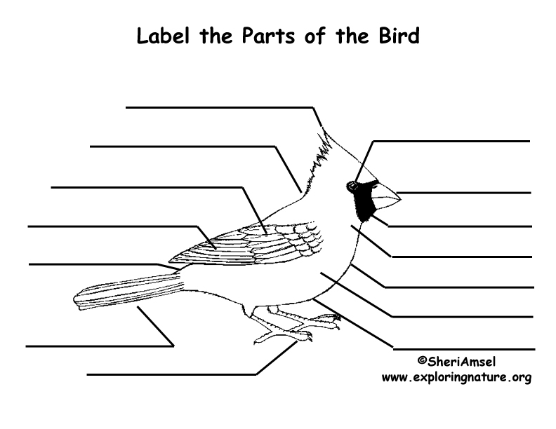 Label the Parts of a Bird