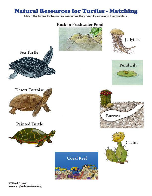 Natural Resources for Turtles - Matching