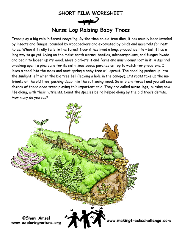 Nurse Log Raising Baby Trees