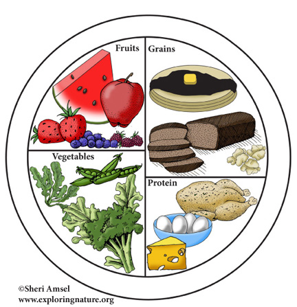 nutrition, foods, myplate,