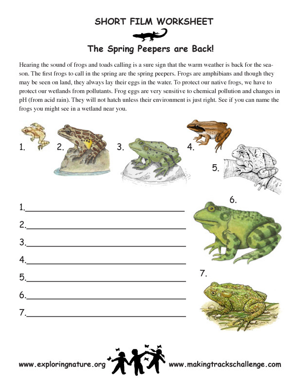 spring peepers and other cool amphibians exploring nature educational resource. Black Bedroom Furniture Sets. Home Design Ideas