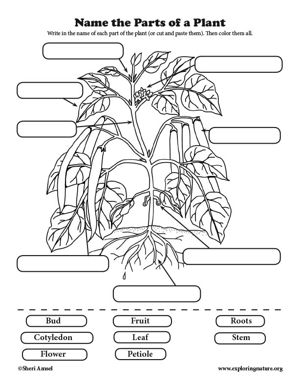 Label the Parts of the Plant