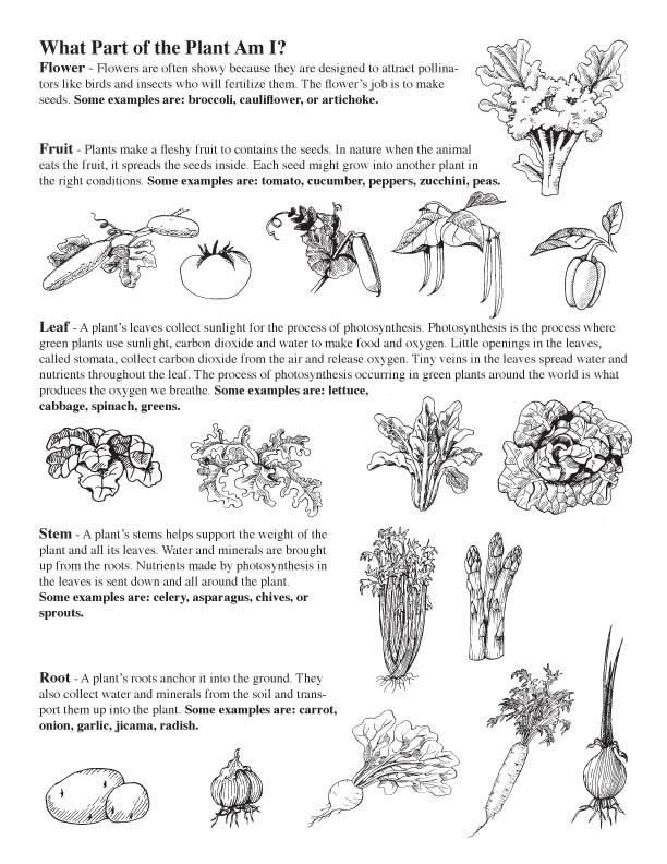 PBL - Plant Regrowth - Stage A Exploration.pdf - PBL Plant