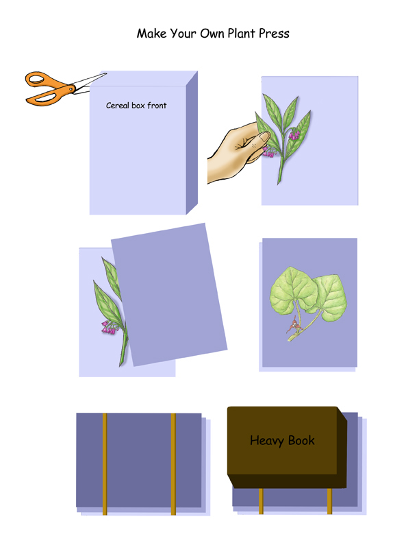 Make Your Own Plant Press