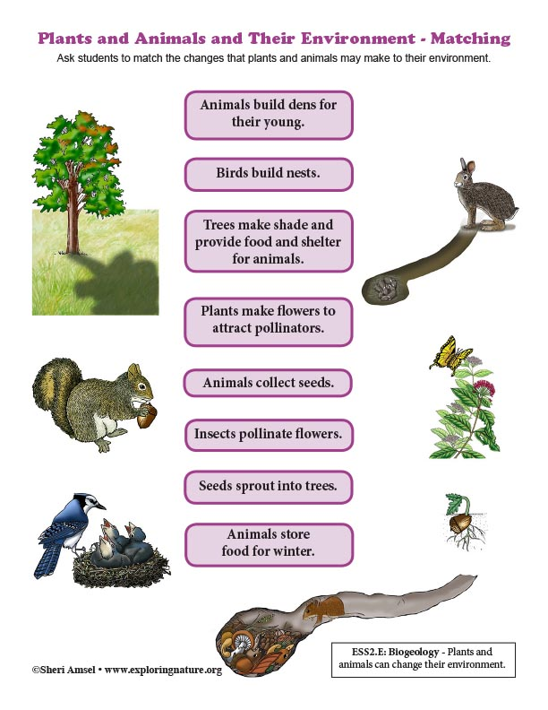 Plants and Animals and Their Environment - Matching