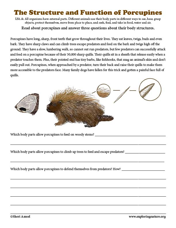 The Structures and Functions of Porcupines - Reading with Short Answers
